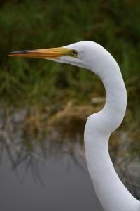 Santa Monica Bay Audubon Society Malibu Lagoon Field Trips @ Malibu Lagoon