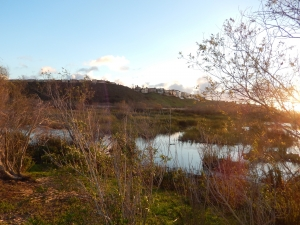 Special Evening Tour at the Ballona Freshwater Marsh @ Ballona Freshwater Marsh
