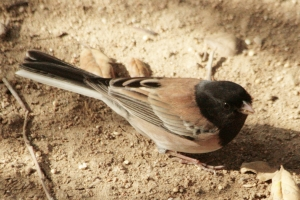 Descanso Gardens Bird Observation Station @ Descanso Gardens