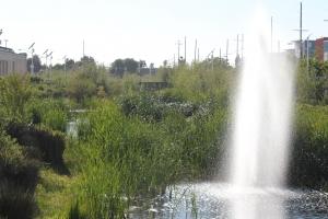 South LA Wetlands Bird Walk @ South LA Wetlands
