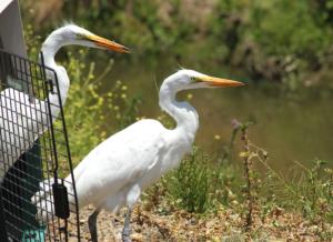 International Bird Rescue Open House @ International Bird Rescue L.A. Wildlife Center