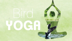 Bird Yoga in Beverly Hills @ The Gottlieb Native Garden