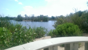 Morning Bird Walk At the Sepulveda Basin Wildlife Area @ Sepulveda Basin Wildlife Reserve