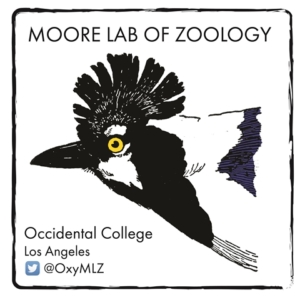 Bird LA Day at Moore Lab of Zoology: Bird Walk & Mini Exhibit @ Occidental College's FEAST Student Garden