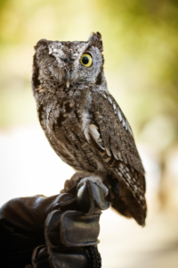 NHM - Meet a Live Animal: Odin the Owl @ Natural History Museum of Los Angeles County
